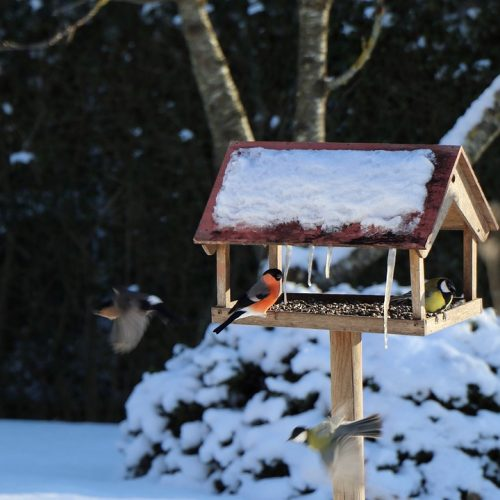birds, sparrows, bird house