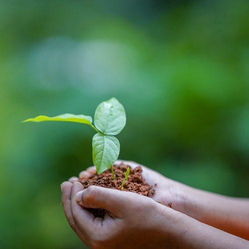 hands, soil, plant